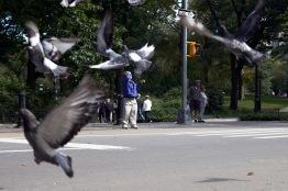 mackie_birds_300dpi